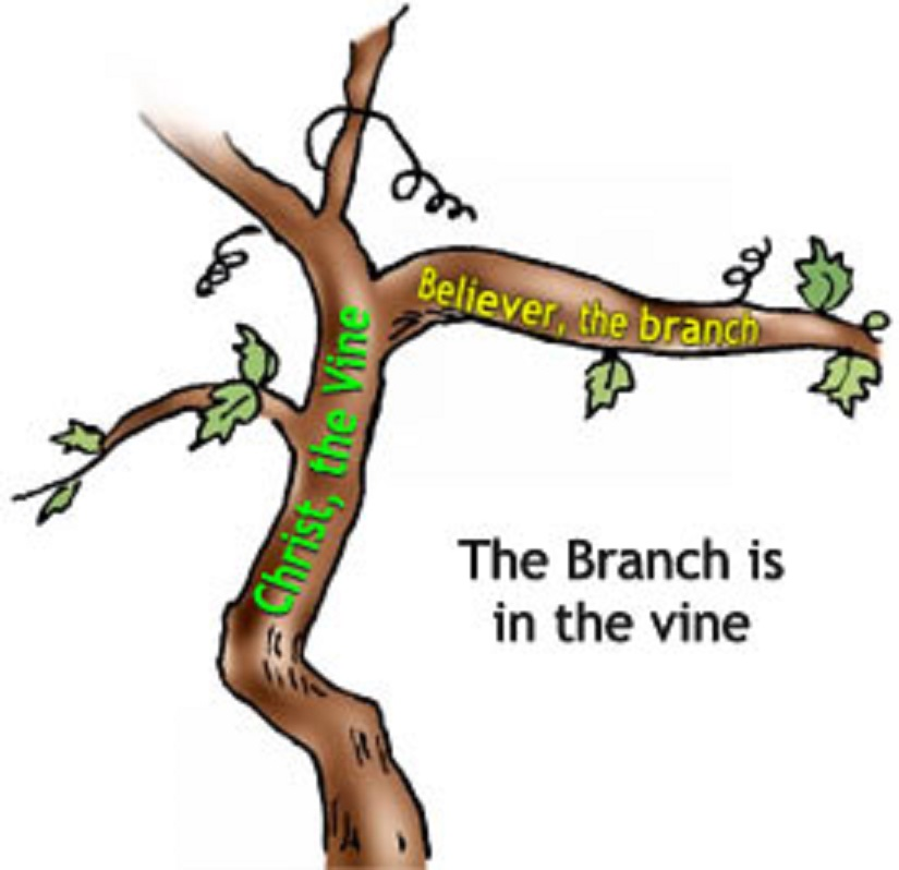 The Vine And Branches